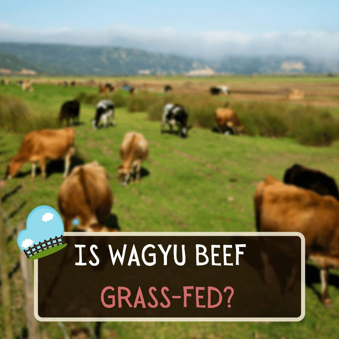 Is Wagyu Beef Grass-fed